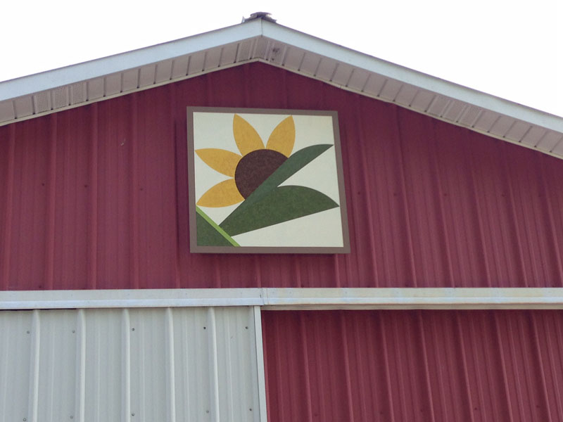 #86 Scout's Sunflower